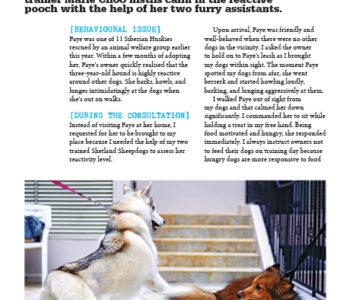 76---78-Good-Dog-Guide---Faye-the-Husky-1
